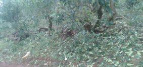 plantaciones yerba afectadas