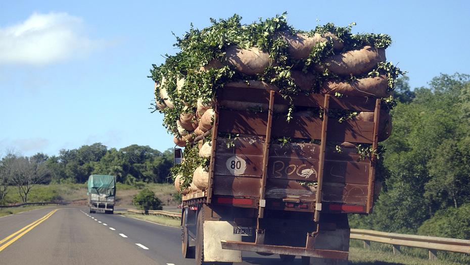 yerba-camiones
