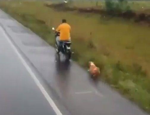 perro-maltrato