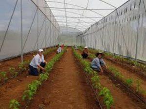 Mujeres productoras y emprendedoras trabajando en invernaderos